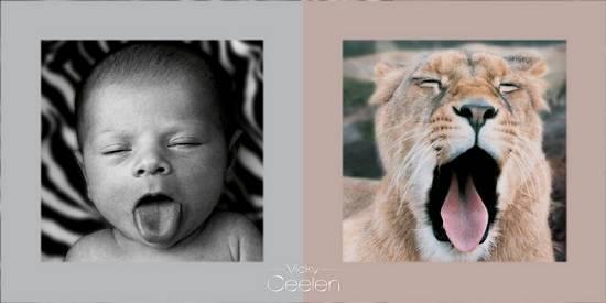 Vicky Ceelen | slavná fotografka dětí a zvířtek